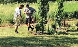 Tree Nursery Work