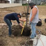 Tree Planting Omaha